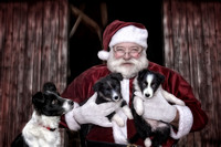 Santa, Tess and Pups 16